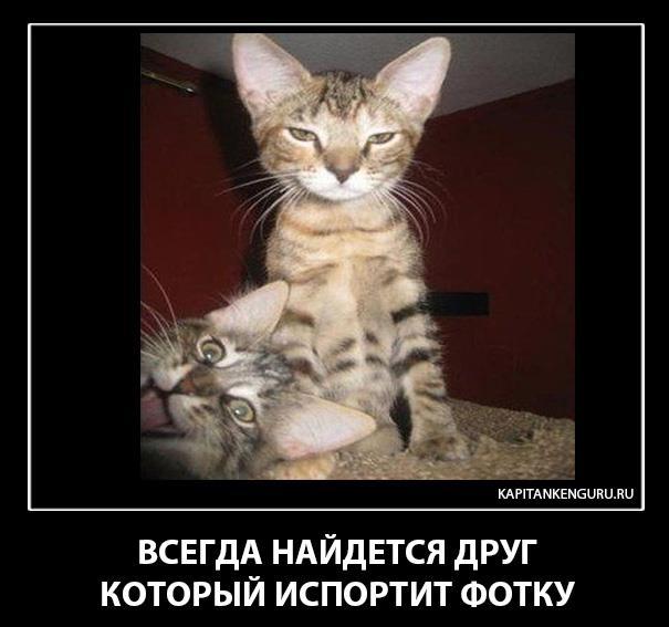 post-9047-1350135056.jpg