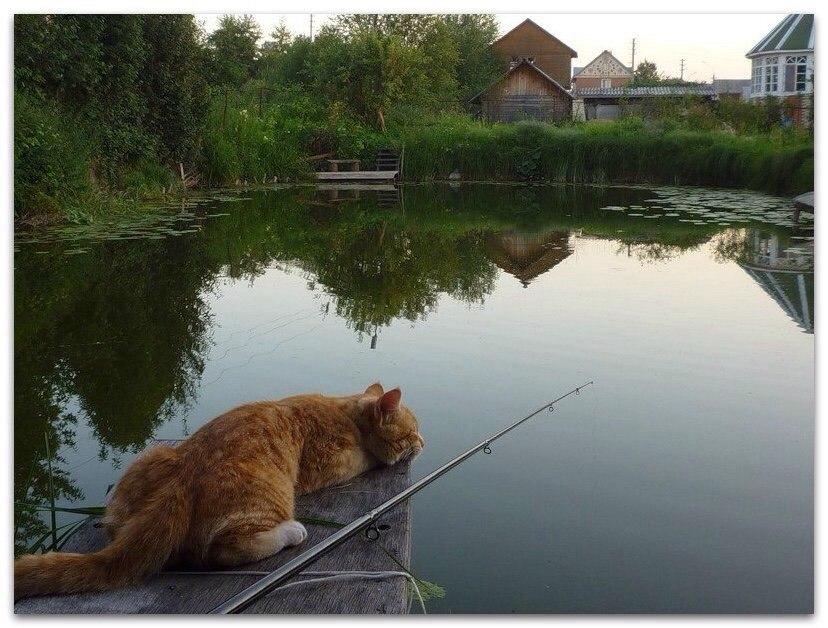 рыбачог.jpg