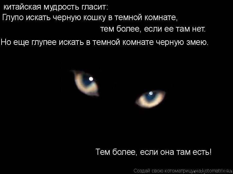 Чёрная кошка в тёмной комнате.jpg