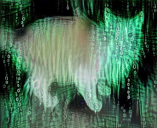 cat1.JPG.38fb7344adc64b5a58cb2f5f52604f7f.JPG