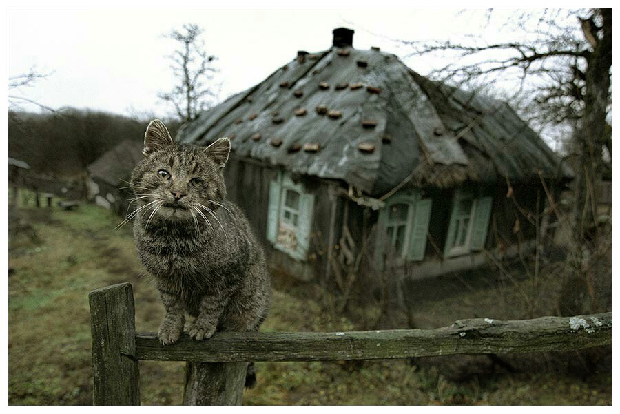 деревенский-кот.jpg