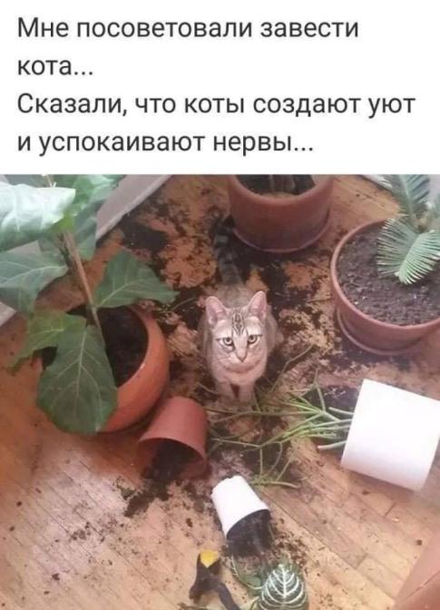 cat.jpg.357e6ff2a55ed0467b91f77d86b55a81.jpg