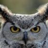 OwlBuklya