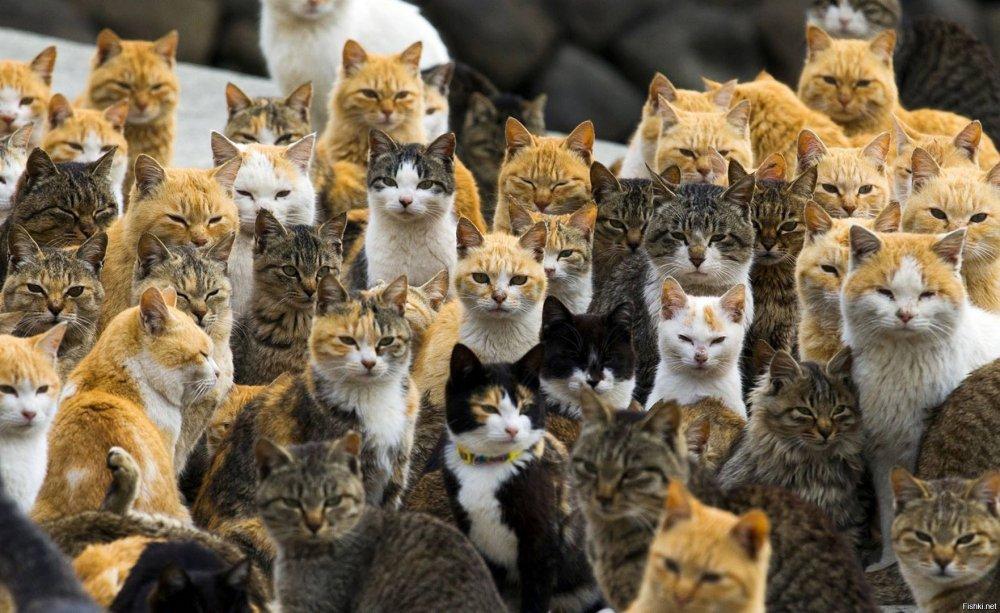 много-котов.jpg