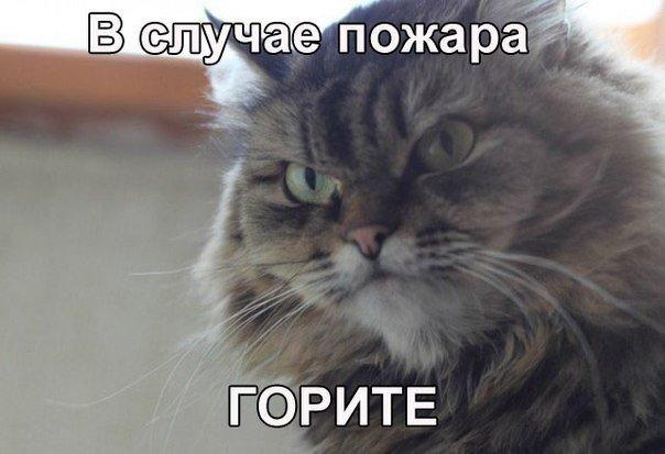 Кот-пожар.jpg