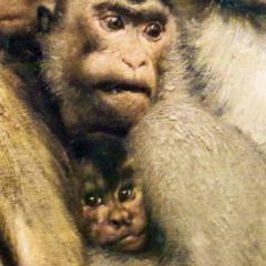 ape_008.png