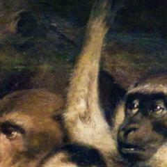 ape_013.png