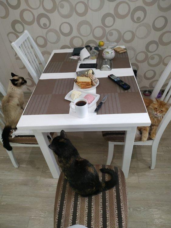 Коты на кухне.jpg